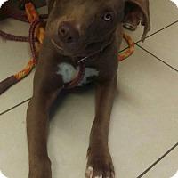 Adopt A Pet :: Canella - Mesa, AZ