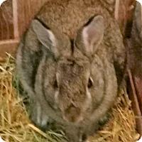 Adopt A Pet :: Becky - Fairfax, VA
