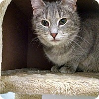 Adopt A Pet :: Sweetie - South Bend, IN