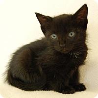 Adopt A Pet :: Kasey - Toccoa, GA