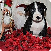 Adopt A Pet :: George - Costa Mesa, CA