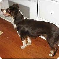Adopt A Pet :: Sheila - Orlando, FL