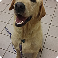 Adopt A Pet :: Gunner - Plainfield, CT