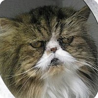 Adopt A Pet :: Fuzzy - Davis, CA