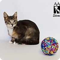 Adopt A Pet :: Stoney - Tomball, TX