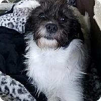 Adopt A Pet :: LEONARD - Gustine, CA
