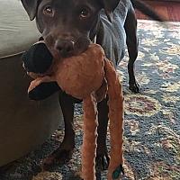 Adopt A Pet :: Pokie - Midlothian, VA