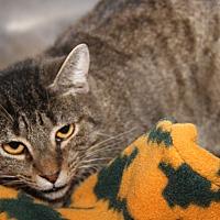 Adopt A Pet :: Nellie - Marietta, OH