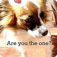 Adopt A Pet :: Stevie Nicks - Sandown, NH