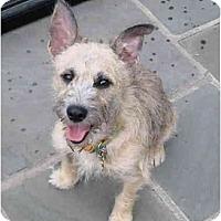 Adopt A Pet :: brian - houston, TX