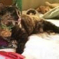 Adopt A Pet :: Penny (aka Penita) - Mission Viejo, CA
