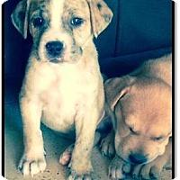 Adopt A Pet :: Tucker - Gilbert, AZ