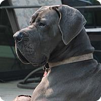 Adopt A Pet :: Bernice - Woodstock, IL