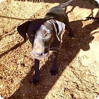 Adopt A Pet :: Kasi - Fort Valley, GA