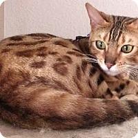 Adopt A Pet :: Cinna - Davis, CA