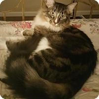 Adopt A Pet :: Turnip - North Highlands, CA