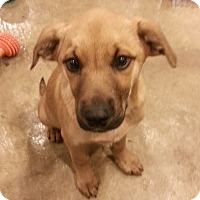 Adopt A Pet :: Auggie*ADOPTED!* - Chicago, IL