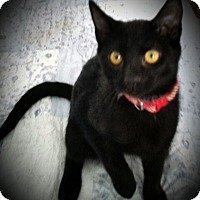 Adopt A Pet :: Pumba - Fairborn, OH