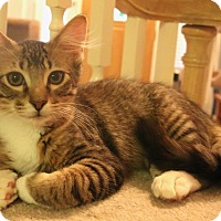 Adopt A Pet :: Sinbad - Grand Prairie, TX