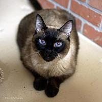 Adopt A Pet :: Olivander - Tucson, AZ