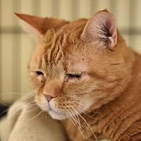 Adopt A Pet :: Duncan - St. Paul, MN
