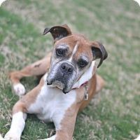 Adopt A Pet :: Marcel - Austin, TX