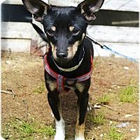 Adopt A Pet :: Dandelion - Huntington, NY