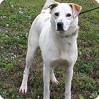 Adopt A Pet :: Rose - Maynardville, TN