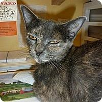 Adopt A Pet :: Izzy - Lake Charles, LA