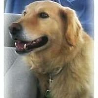 Adopt A Pet :: Tug - Foster, RI