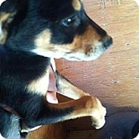 Adopt A Pet :: Cheese - pasadena, CA