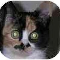 Adopt A Pet :: Caramels - Portland, OR