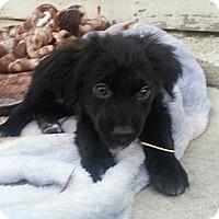 Adopt A Pet :: Dewey*PENDING!* - Chicago, IL