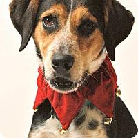 Adopt A Pet :: Juniper