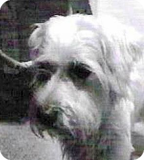 Terrier (Unknown Type, Small) Mix Dog for adoption in Spokane, Washington - Walter