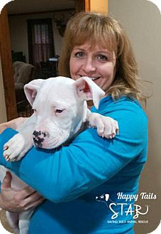 American Bulldog Mix Puppy for adoption in Northville, Michigan - zII16 Turner -ADOPTED