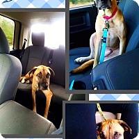 Adopt A Pet :: Drake - Bogalusa, LA
