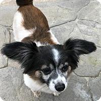 Adopt A Pet :: Carlton - Costa Mesa, CA