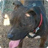 Adopt A Pet :: Diego - Albany, NY