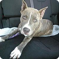 Adopt A Pet :: Bally - Orlando, FL