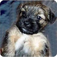 Adopt A Pet :: Mr. Jack - Mays Landing, NJ