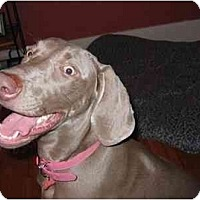 Adopt A Pet :: Savannah  **ADOPTED** - Eustis, FL
