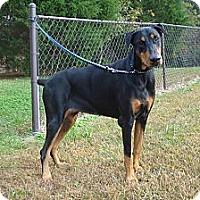 Adopt A Pet :: GURL - ROCKMART, GA