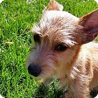 Adopt A Pet :: Baby Payton 8 lbs. - Marlton, NJ