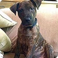 Adopt A Pet :: Heath - Homewood, AL