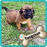 Adopt A Pet :: Tungsten - Marlton, NJ