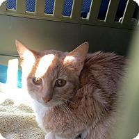 Adopt A Pet :: Grady - East Brunswick, NJ