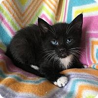 Adopt A Pet :: Arabella - Tampa, FL
