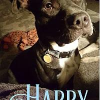 Adopt A Pet :: Harry - Cheney, KS