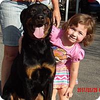 Adopt A Pet :: Duke (95 lb) GREAT Family Pet - Burlington, VT